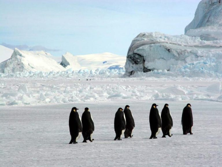 photo voyage antarctique