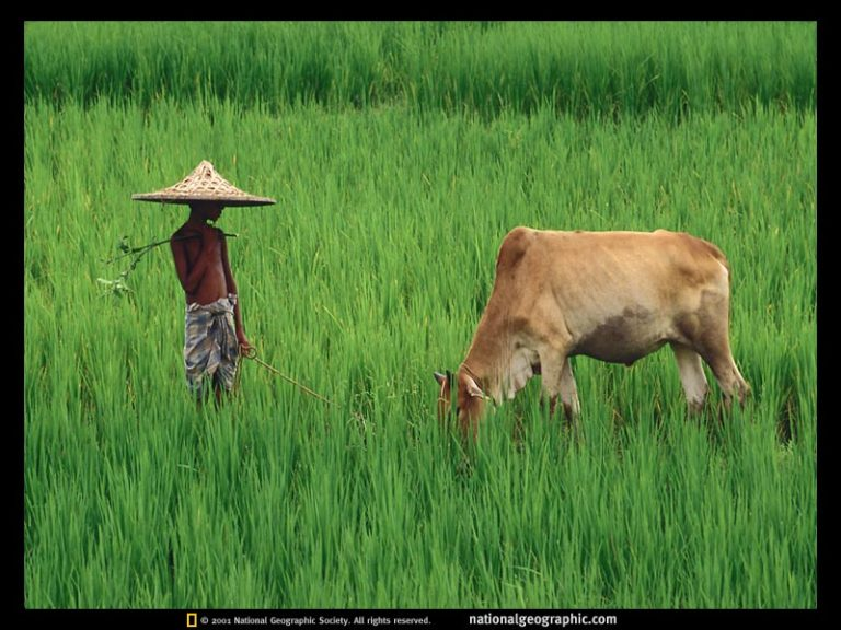 photo voyage bangladesh
